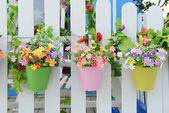 Vasos de flores com cerca de suspensão — Foto Stock