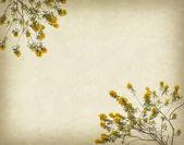 Flower blossom on old antique vintage paper background — Stockfoto