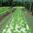 Stock Photo: Hydroponic farm