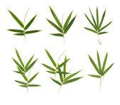 Bamboe bladeren — Stockfoto