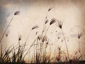 Reed stalks in the swamp against sunlight. — Stock Photo