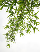 Bamboo leaves isolated on white background — Foto de Stock