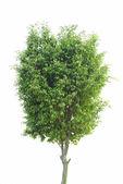 Plant tree — Stock Photo