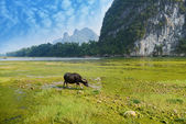China Guilin landscape raft and buff on grass — Stock Photo