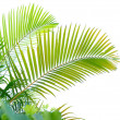 Palm tree isolated on white background — Stockfoto