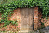 Door and a wall covered with ivy — Stock Photo