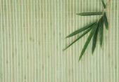 Bambusové listy izolované na bílém pozadí — Stock fotografie