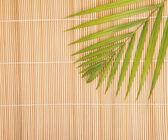 棕榈叶竹背景 — 图库照片