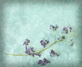 Hyacinth flowers on a vintage textured background — Stock Photo