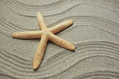 Starfish and shells with frame on the beach, vacation memories — Stock Photo