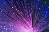 Cable de fibra óptica de la red — Foto de Stock