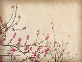 Spring plum blossom blossom on Old antique vintage paper backgro — Stock Photo