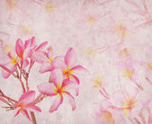 Frangipani or plumeria tropical flower with old grunge antique p — Stock Photo
