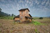 Paisaje rural con casa en un campo de caña de azúcar — Foto de Stock