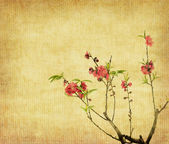 Plum blossom on old antique vintage paper background — Stock Photo