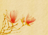 Pink magnolia flowers on old paper background — Stock Photo