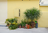 Flowers in pots on the stone yellow house — Stock Photo