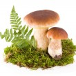 Mushrooms with moss — Stock Photo