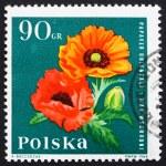 Postage stamp Poland 1964 Oriental Poppy, Garden Flower — Stock Photo #11624953