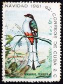 切手キューバ 1961年キューバ キヌバネドリ目鳥 — ストック写真
