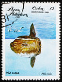 Postage stamp Cuba 1981 Ocean Sunfish — Stock Photo