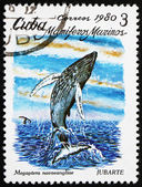 Postage stamp Cuba 1980 Humpback Whale — Stock Photo
