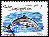 Postage stamp Cuba 1980 Bottlenose Dolphin — Stock Photo