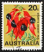 Selo postal austrália 1968 sturt — Foto Stock