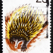 Postage stamp Australia 1974 Spiny Anteater, Echidna - Stock Photo