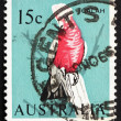 Postage stamp Australia 1966 Galah on Tree Stump - Stock Photo
