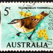 Postage stamp Australia 1966 Yellow-Tailed Thornbill - Stock Photo