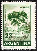 Postage stamp Argentina 1965 Red Quebracho Tree — Stock Photo
