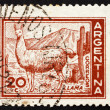 Stock Photo: Postage stamp Argentin1961 Llama