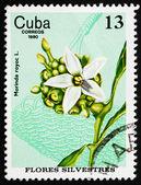 Frimärke Kuba 1980 redgal, morinda royoc, wildflower — Stockfoto