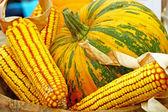 Corn and pumpkin — Stock Photo