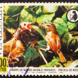 Royalty-Free Stock Photo: Postage stamp Venezuela 1968 Red-eyed Vireo Feeding Cowbird