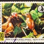 Postage stamp Venezuela 1968 Red-eyed Vireo Feeding Cowbird — Stock Photo