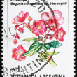 Postage stamp Argentina 1985 Begonia Micranthera var. Hieronymi - Stock Photo