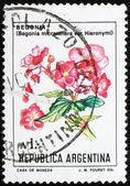 Postage stamp Argentina 1985 Begonia Micranthera var. Hieronymi — Stock fotografie