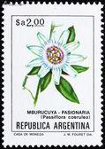 Postage stamp Argentina 1983 Blue Passion Flower, Passiflora Cae — Stock Photo