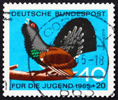 Postage stamp Germany 1965 Capercaillie, Tetrao Urogallus — Stock Photo