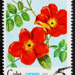 Stock Photo: Postage stamp Cub1979 Rose, RosEglanteriPunicea