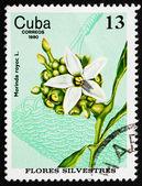 Postage stamp Cuba 1980 Redgal, Morinda Royoc, Wildflower — Stock Photo