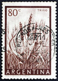 Postage stamp Argentina 1954 Wheat, Cereal — Stock Photo