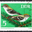 Stock Photo: Postage stamp GDR 1973 Firecrests, Passerine Bird