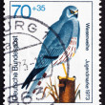 Postage stamp Germany 1973 Montagu's Harrier, Bird of Prey — Stock Photo