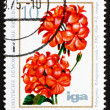 Stock Photo: Postage stamp GDR 1975 Pelargonium, Flowering Plant