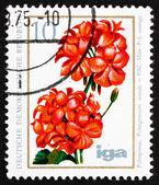 Postzegel gdr 1975 pelargonium, bloeiende plant — Stockfoto