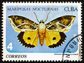 Postage stamp Cuba 1979 Othreis Materna, Butterfly — Stock Photo