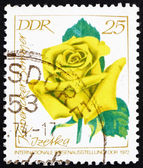 切手 gdr 1972 岸夏のバラ — ストック写真